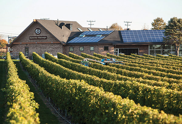 Solar-panelsl-newport-vineyards